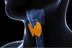What Everyone 50+ Should Know About Their Thyroid